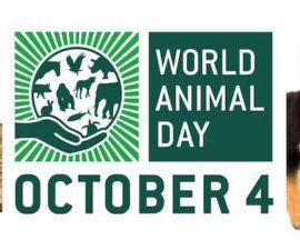 dünya hayvanlar günü